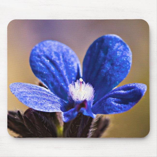 Spring Blue Flower