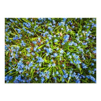 Spring blue flowers glory-of-the-snow custom invitation