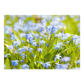 Spring blue flowers glory-of-the-snow personalized invites
