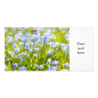 Spring blue flowers glory-of-the-snow photo cards