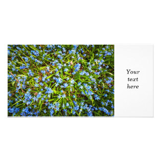 Spring blue flowers glory-of-the-snow photo card template