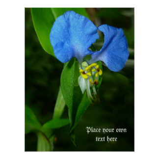 Spring Blue poster Customize with words