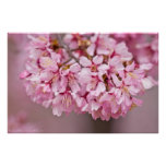 Spring Bouquet Japanese Cherry Blossom Poster