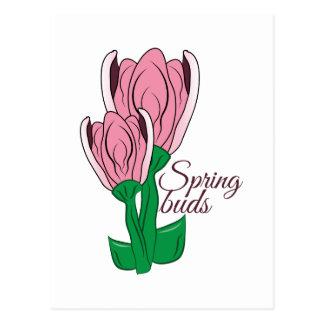 Spring Buds Postcard