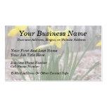 Spring Bulbs - Daffodils Business Card