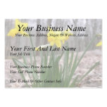 Spring Bulbs - Daffodils Business Card Template