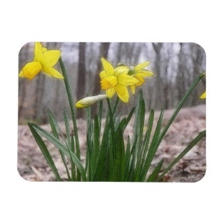 Spring Bulbs - Daffodils Flexible Magnet