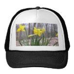 Spring Bulbs - Daffodils Trucker Hats