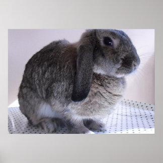 Spring Bunny Rabbit Animal Pet Cute Face Ears Eyes Poster