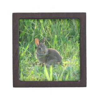 Spring Bunny - Secret Box Premium Jewelry Boxes
