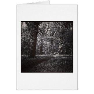 Spring Bute Park, Cardiff, Wales Greeting Card
