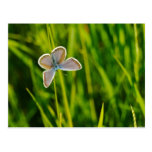Spring Butterfly Postcard