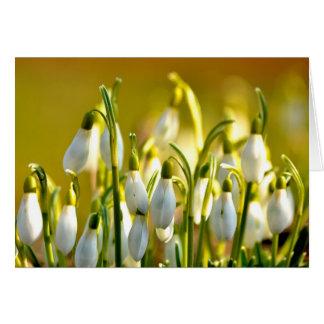 Spring - Card
