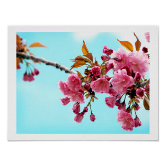 Spring Cherries Poster