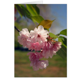 Spring Cherry Blossom Note Greeting Card