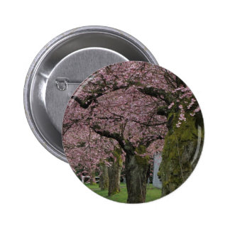 Spring cherry  blossoming trees pinback buttons