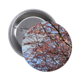 Spring cherry  blossoming trees button