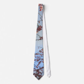 Spring cherry  blossoming trees tie
