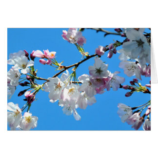 Spring Cherry Blossoms Card