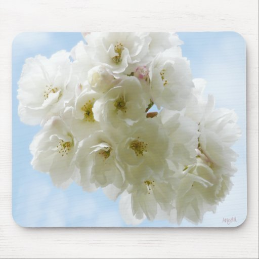 Spring Cherry Blossoms mousepad