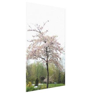 spring cherry flowering tree in the rain canvas print