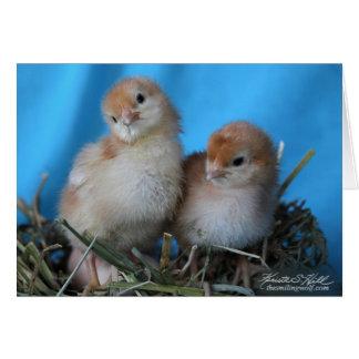 Spring Chicks Card