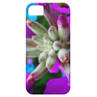 Spring Color Case For iPhone 5/5S