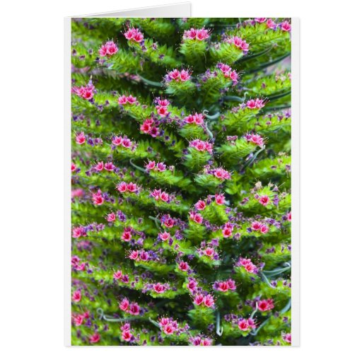 Spring Color Greeting Card