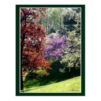 Spring Colors Postcard