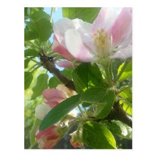 #spring #colours postcard