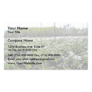 Spring Cotton grass on Grid 37394 Double-Sided Standard Business Cards (Pack Of 100)
