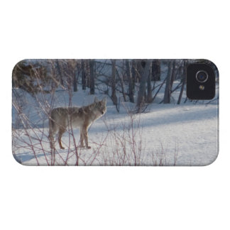 Spring Coyote Case-Mate iPhone 4 Case