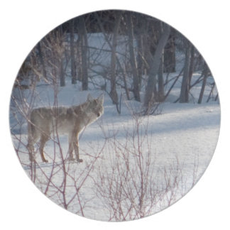 Spring Coyote Dinner Plate