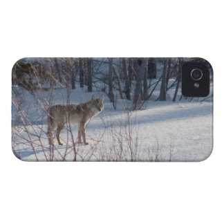Spring Coyote iPhone 4 Cover