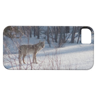 Spring Coyote iPhone SE/5/5s Case