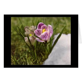 Spring Crocus Greeting Cards