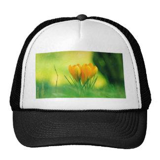 Spring Crocus Trucker Hats