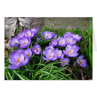 Spring Crocuses Card