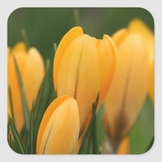Spring Crocuses envelope sealer stickers