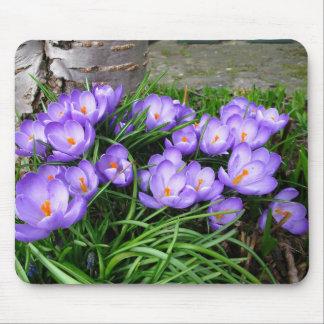 Spring Crocuses Mouse Pad