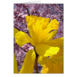 Spring Daffodil Flowers Cards Pink Tree Blossoms