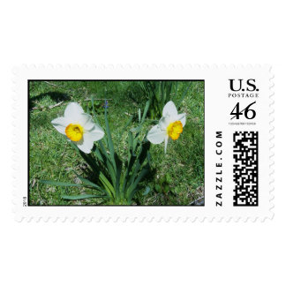 Spring Daffodils Stamps