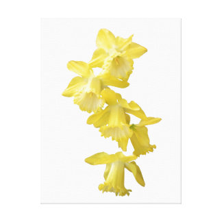 Spring Daffodils Wrapped Canvas Stretched Canvas Print