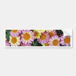 Spring Daisies Blooms Bumper Sticker