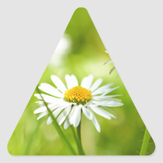 Spring daisies close up triangle sticker