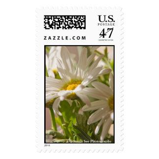 Spring Daisies - postage, large Postage