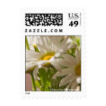 Spring Daisies - postage, small
