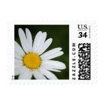 Spring daisy stamp