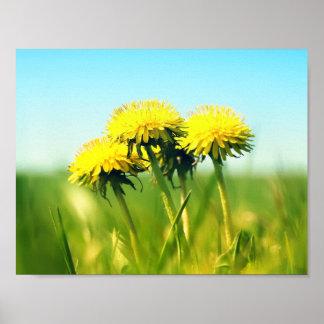 Spring dandelions poster
