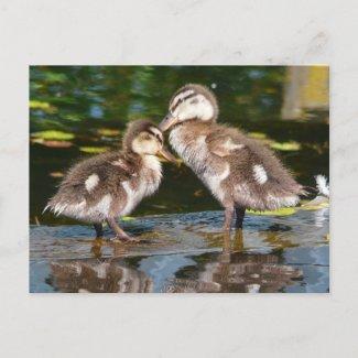 Spring Duckies postcard